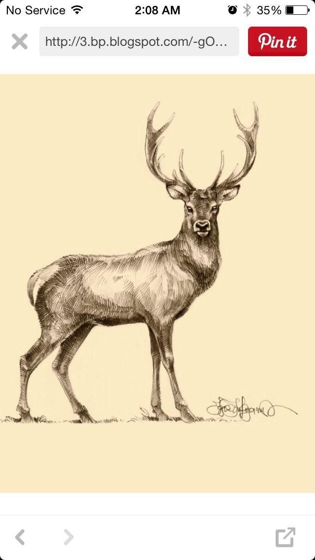 Deer tattoo   Tattoos   Pinterest   Ciervo, Venado y Dibujo