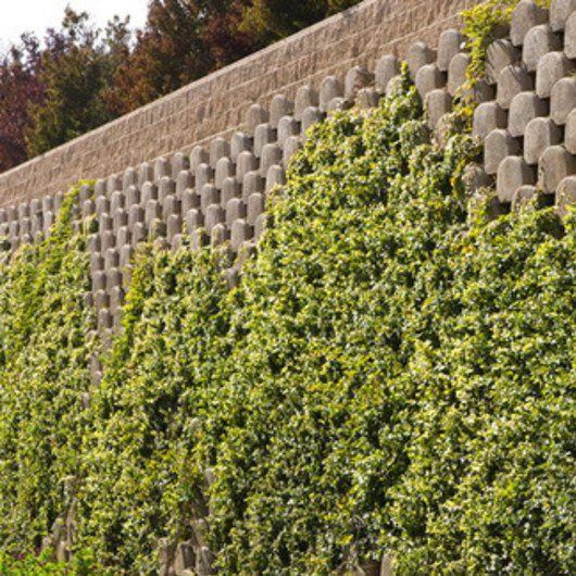 L2o Restaurant Dirk Denison Architects Concrete Wall Green Facade Garden Wall