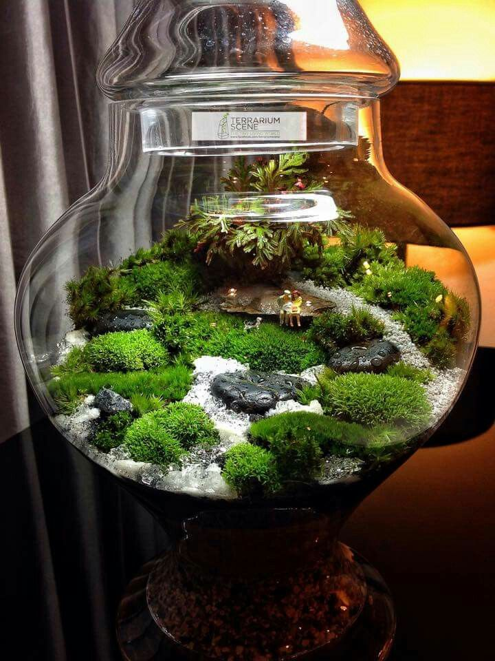 Moss Terrarium Beautiful Crafty Plants Pinterest Garten
