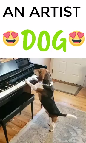 Best Funny Dogs ARTIST DOG PUPPY FUNNY VIDEOS REACTION - dogs funny videos funny dogs videos dog in piano , visit to see more dogs topics and videos #dogs #funnyvideos #pet #petlovers #funnydog #funnypuppy #puppylovers #puppies #puppiesvideos 5