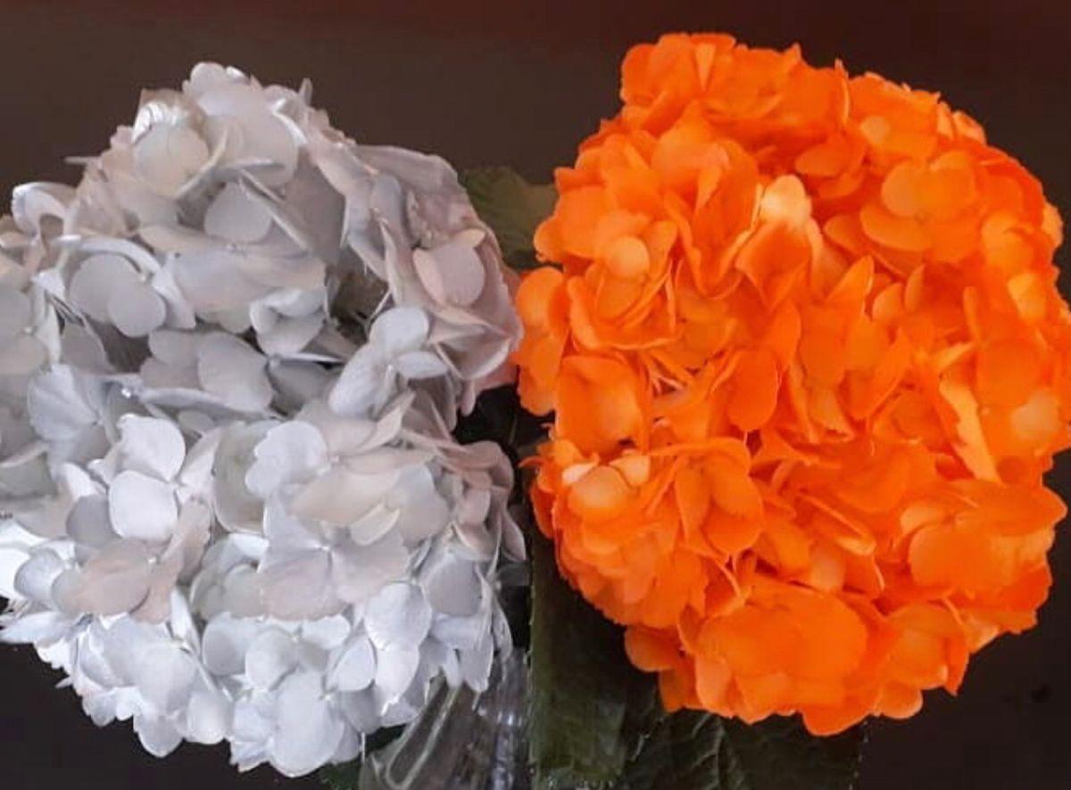 Buy Wholesale Orange Hydrangeas Flowers At Affordable Prices In 2020 Wholesale Flowers Hydrangea Pink Hydrangea