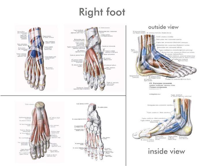 Right Foot | Health - Body | Pinterest | Anatomy