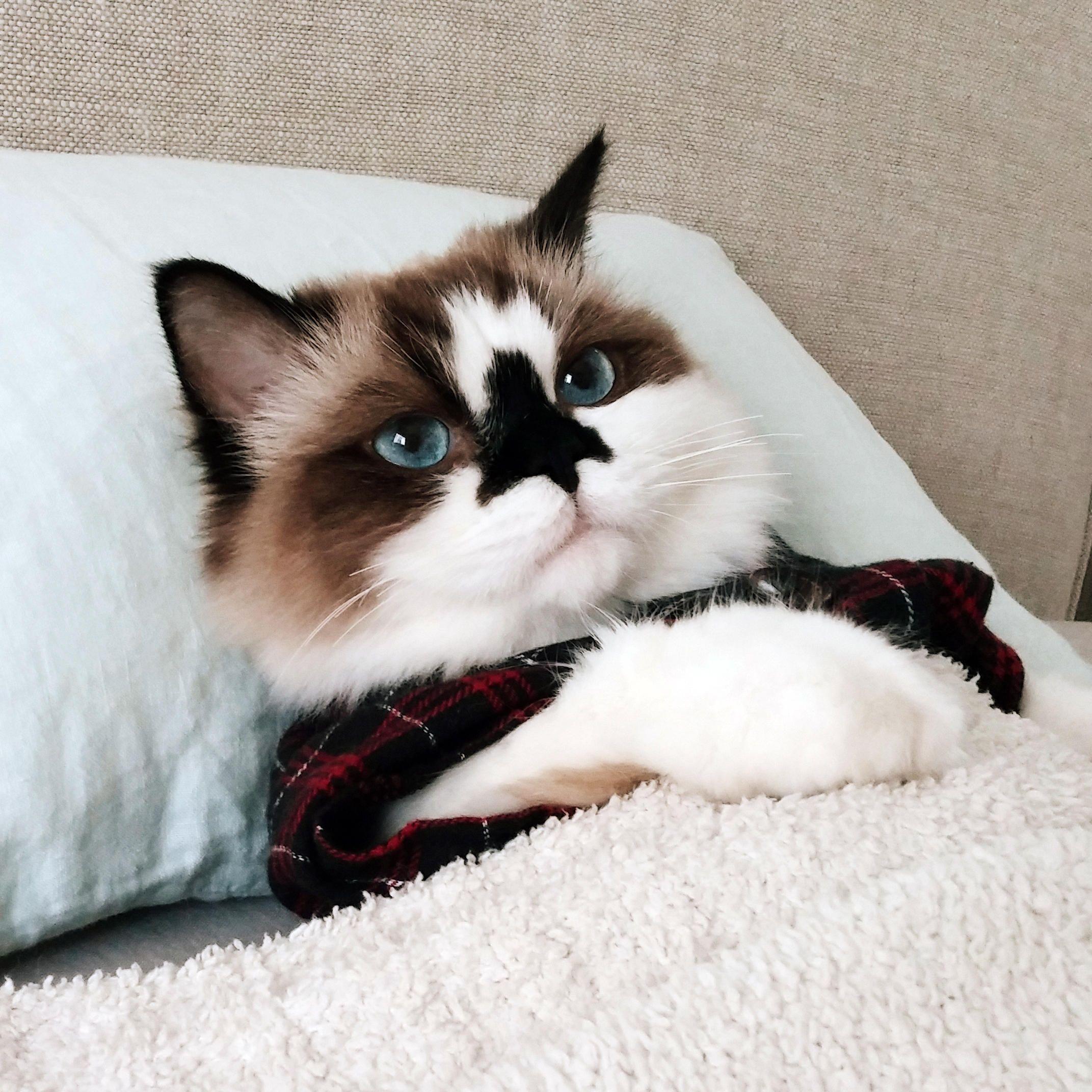 Meet Cat Star Finalist Albert Baby Cat Baby Cats Cats And Kittens Cute Animals