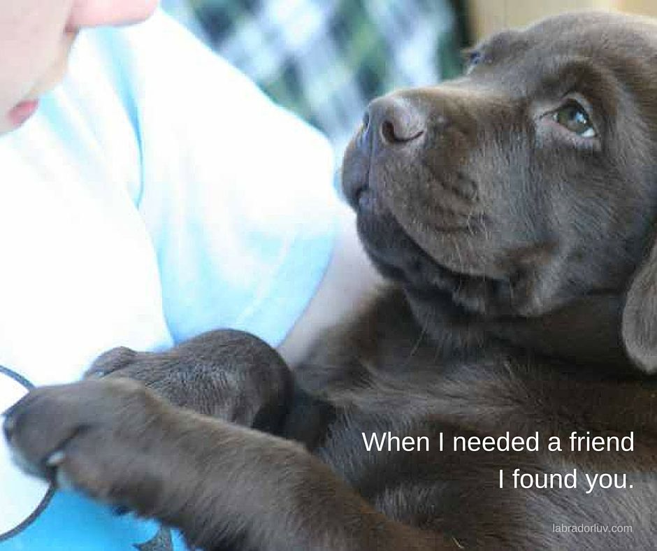 Pin By Missy Drake On Adorable Labradors Labrador Labrador Retriever Puppies