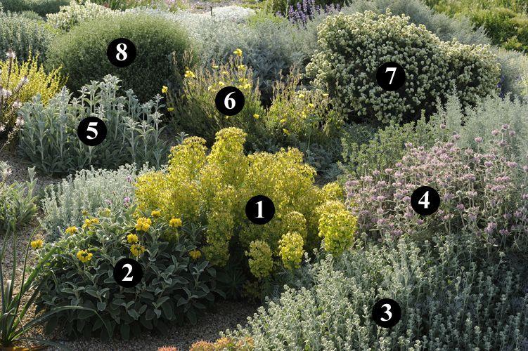 1 : Euphorbia characias subsp. wulfenii  2 : Phlomis x cytherae  3 : Ballota acetabulosa  4 : Phlomis purpurea  5 : Stachys byzantina  6 : Cistus x tardiflorens  7 : Anthyllis barba-jovis  8 : Dorycnium pentaphyllum