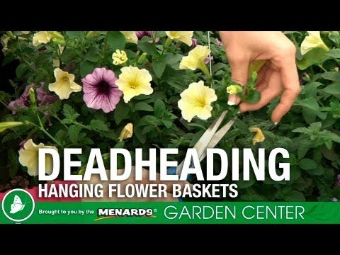 Pin By Menards On Diy Secrets To Gardening Deadheading Flowers Hanging Flower Baskets Container Gardening Flowers