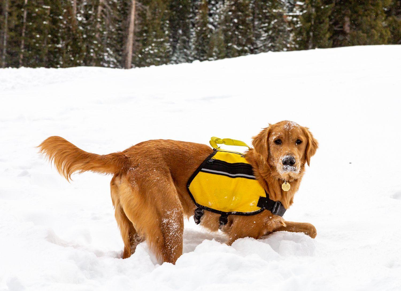 Meet 8 of Colorado's hardest working ski dogs Dogs