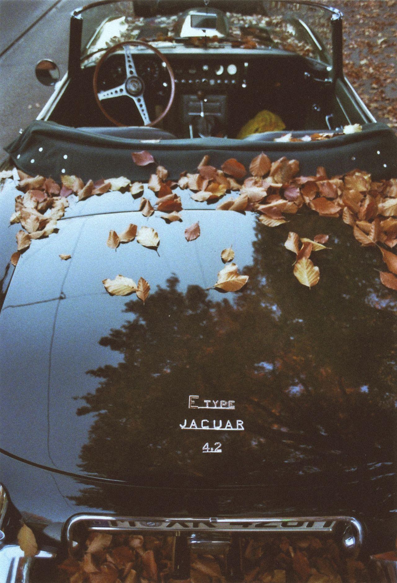 """JAGUAR IN Autumn """""""