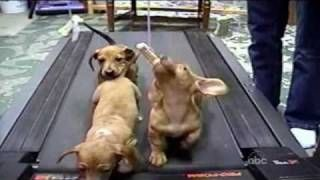 Cute Dogs Americas Funniest Home Videos Afv Via Youtube