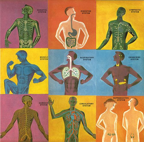 Semester Theme: The Human Body Systems | Architecture, Plumbing ...
