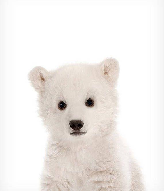 Polar bear art, Nursery art, Zoo animals, PRINTABLE art, Nursery decor, Animal art, Baby animals, Nursery wall art, Kids art, Bear cub print #kinderzimmerkunst