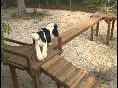 Dog Obstacle Confidence Course, would love to build such a ...