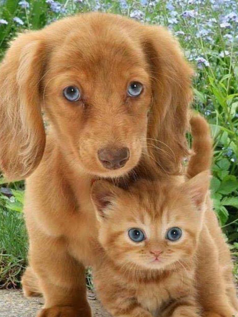 Pin Von Cashagon Auf Cute Susse Tiere Babytiere Susse Tiere Bilder