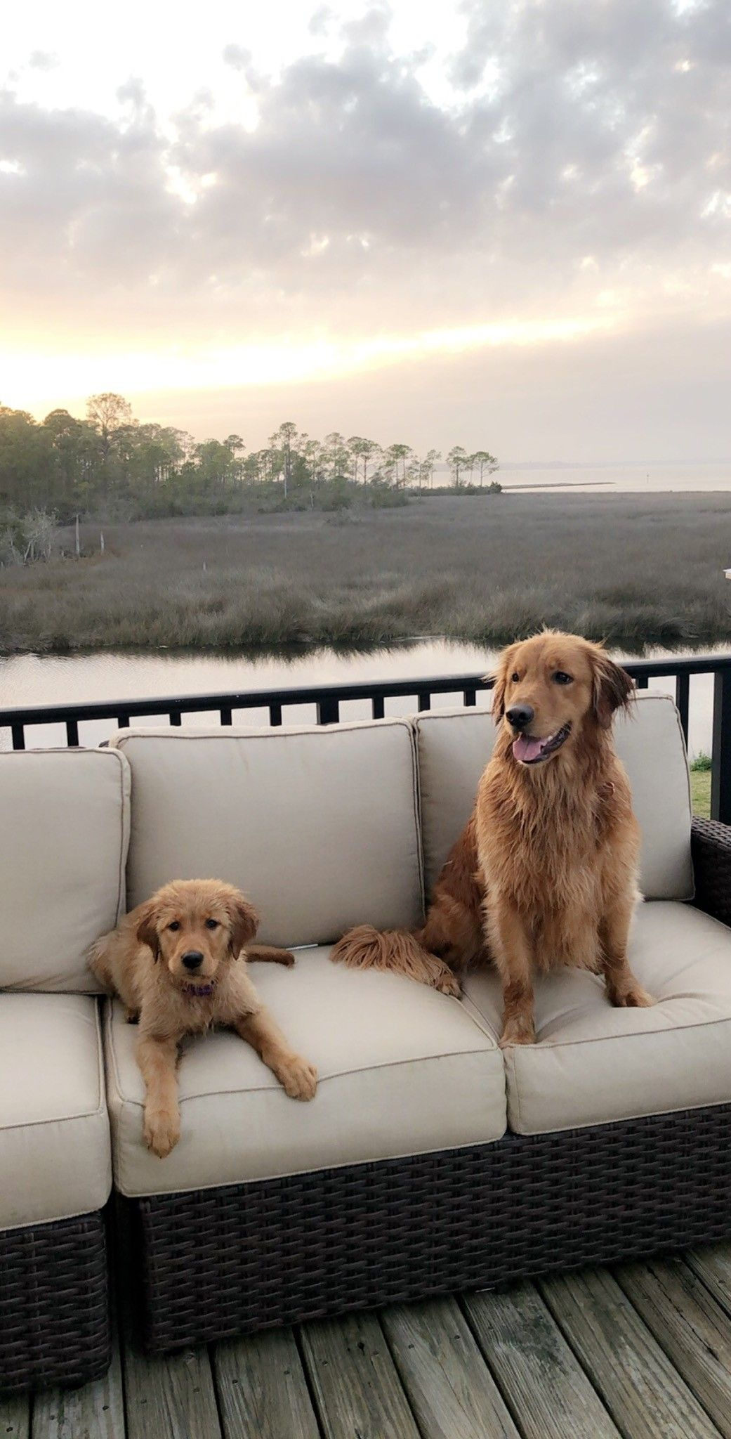 Hytop Goldens, Ivy and Luna, enjoying the marsh.....these