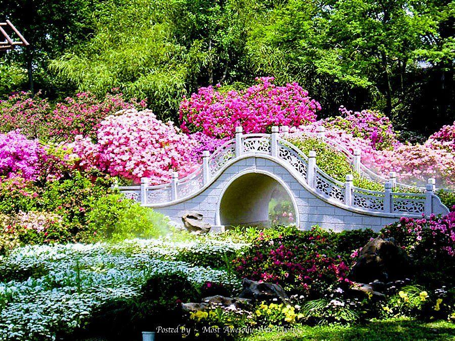 Japanese Zen Garden Garden Bridge Gorgeous Gardens Beautiful Gardens