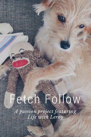 Pets   Fetch Follow