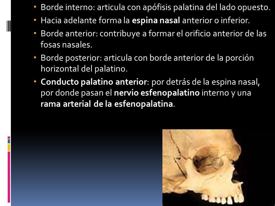 HUESOS DE LA CARA Anato iii. - ppt video online descargar | ANATOMIA ...