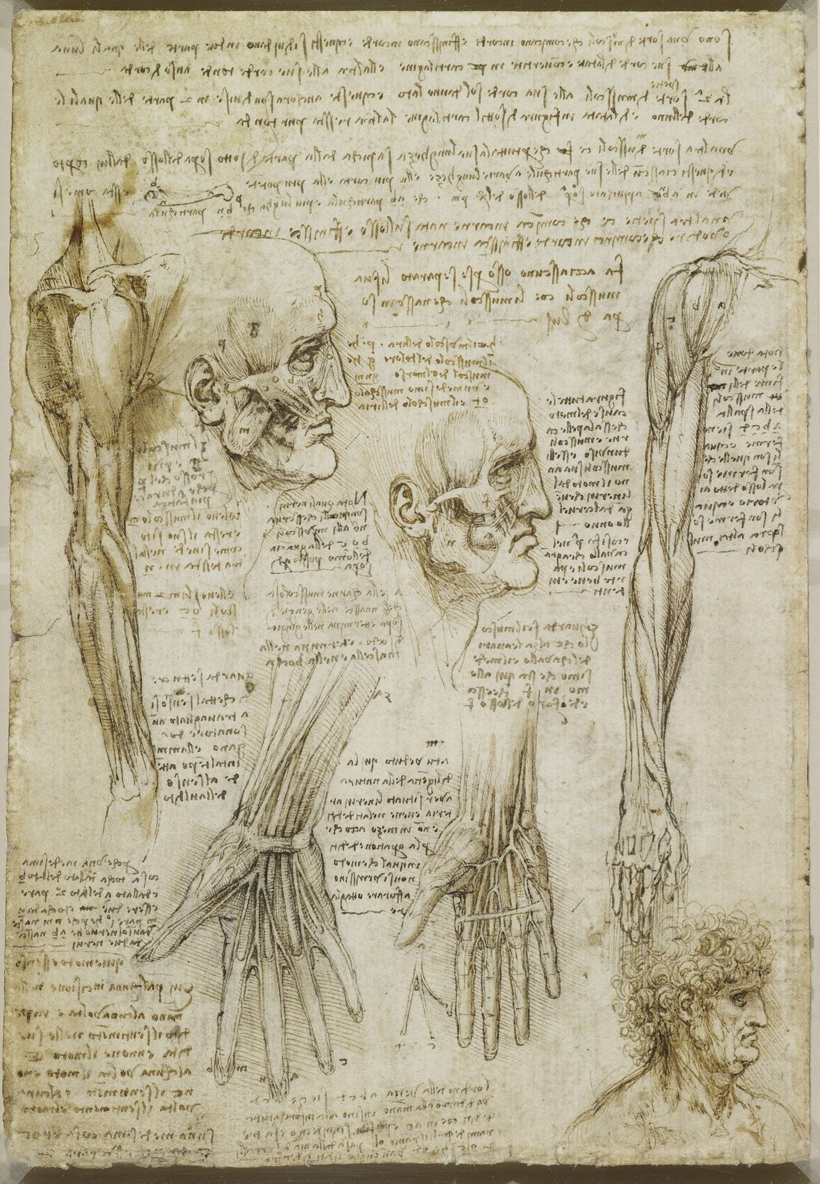 Leonardo da Vinci, 1452-1519, Italian, The muscles of the face and ...