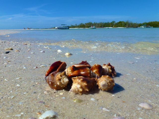 Little Hickory Beach Bonita Springs Florida 35 Minutes From Sanibel