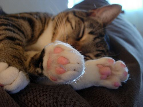 kitty cat Patty Paws