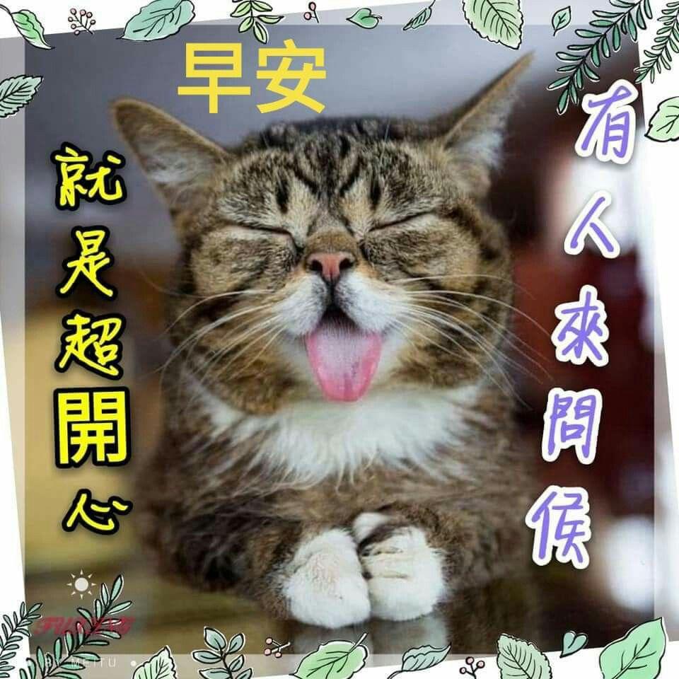 Pin By Shawnballackabby On 早安 Cats Good Morning Animals