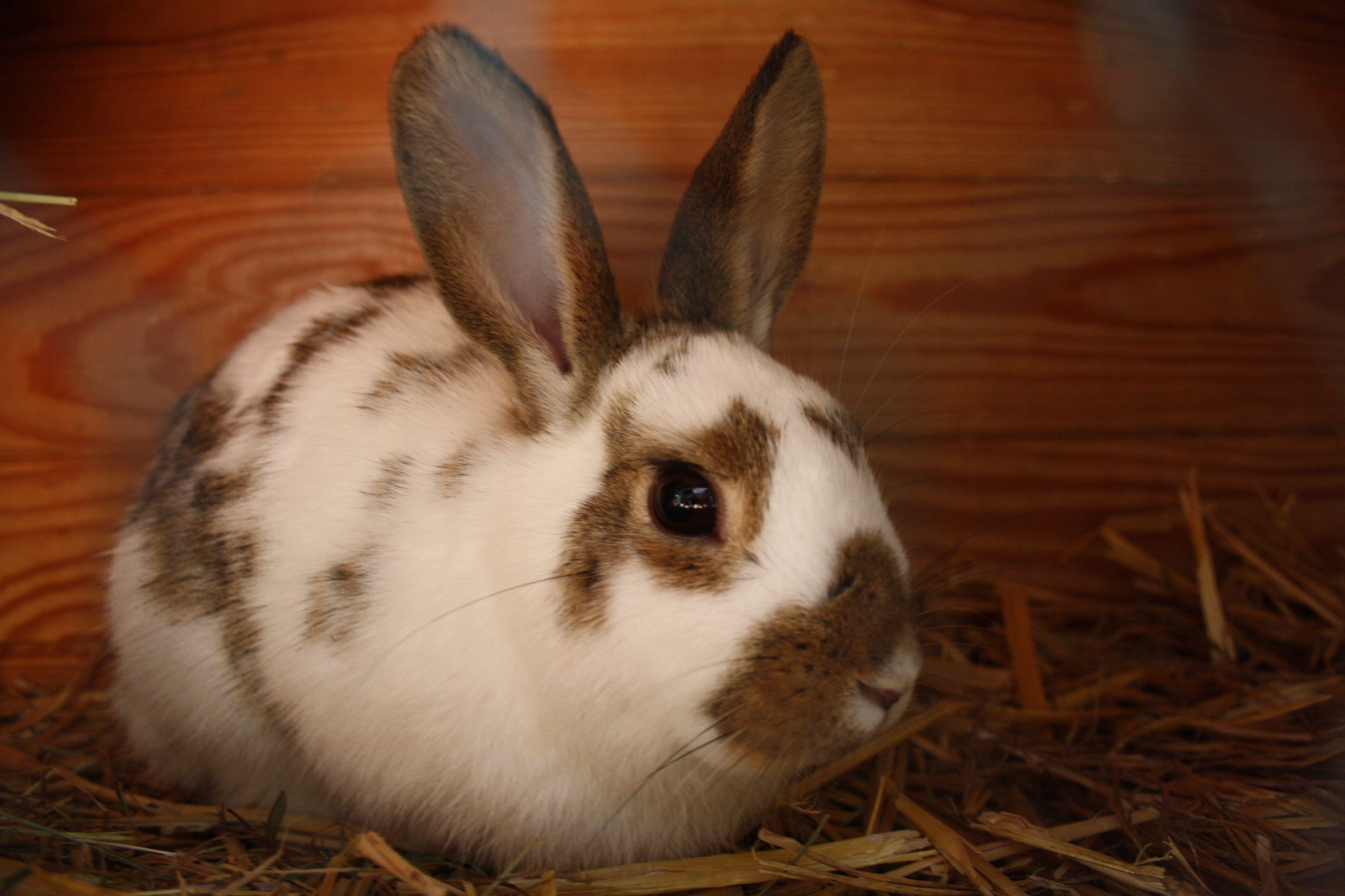Schnuggi Wildkaninchen Zwergkaninchen Mix Bunny Animals Rabbit