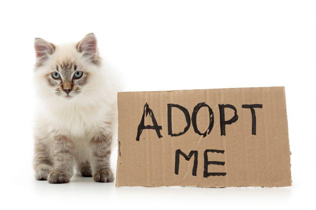Adopt A Cat Pet Adoption Pets Cat Sitting