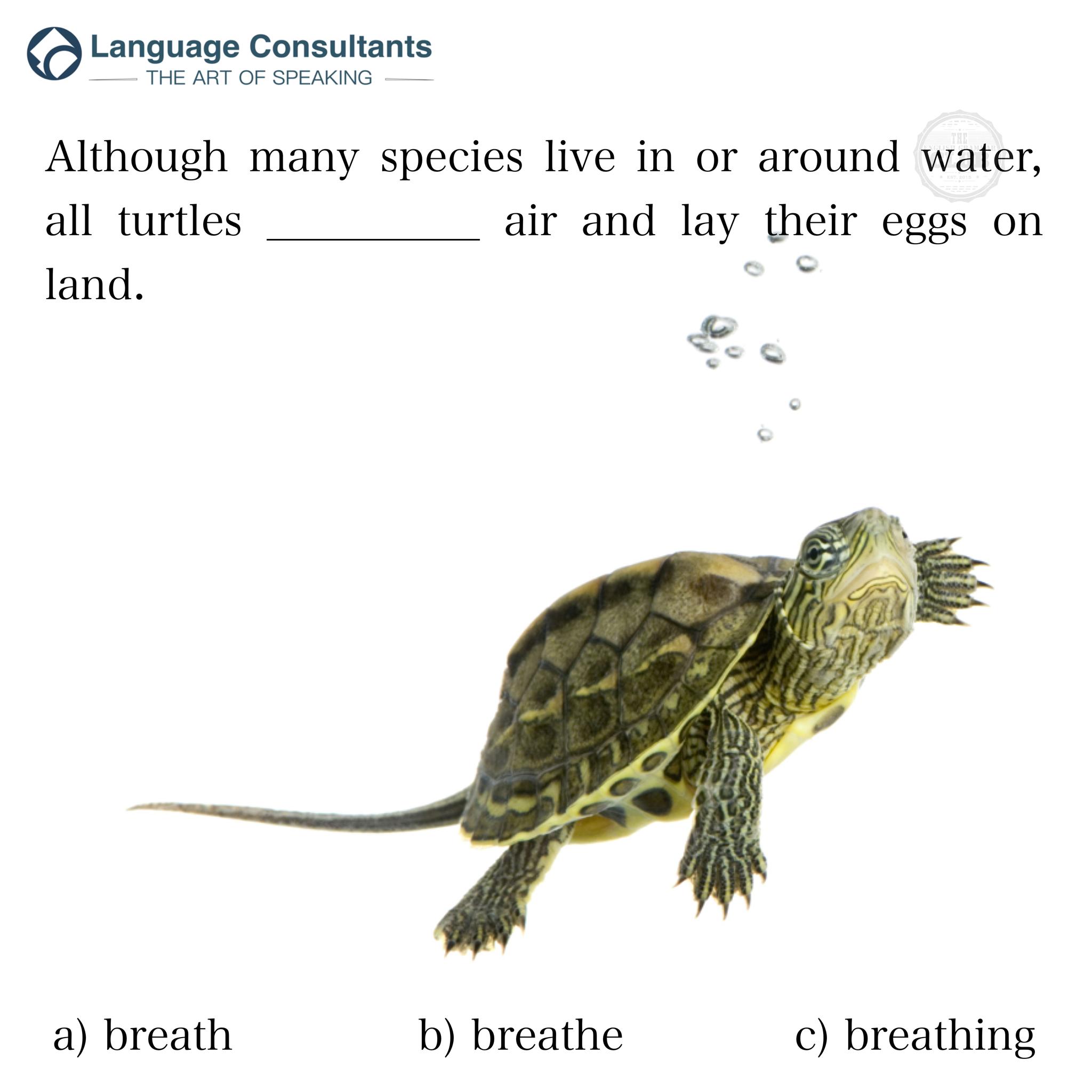 Turtle nel 2020