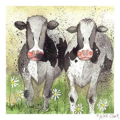 'Curious Cows
