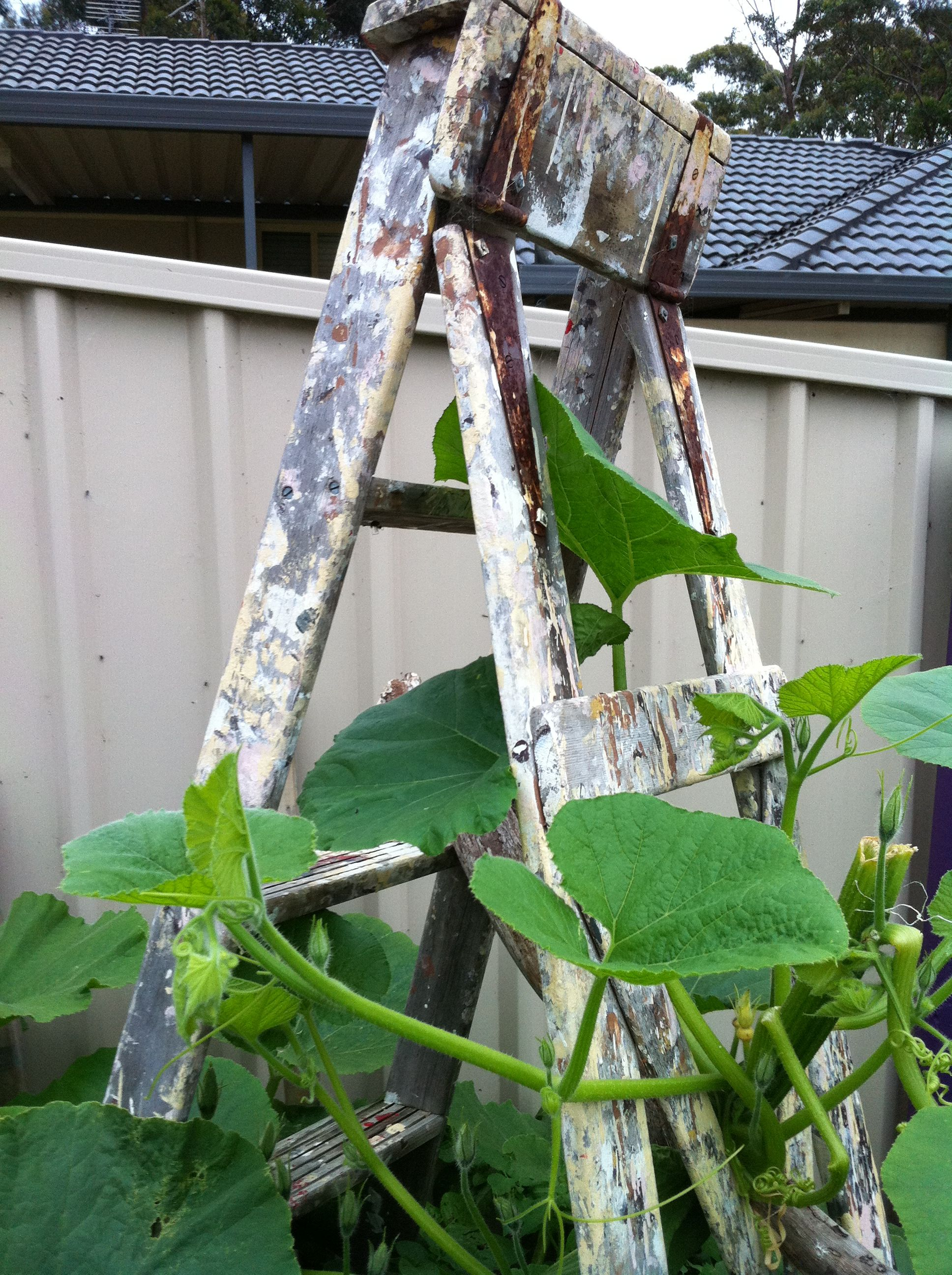 Ladders in the garden.