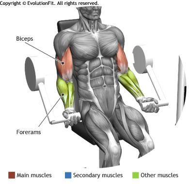 biceps  curl arm machine  home workout equipment biceps