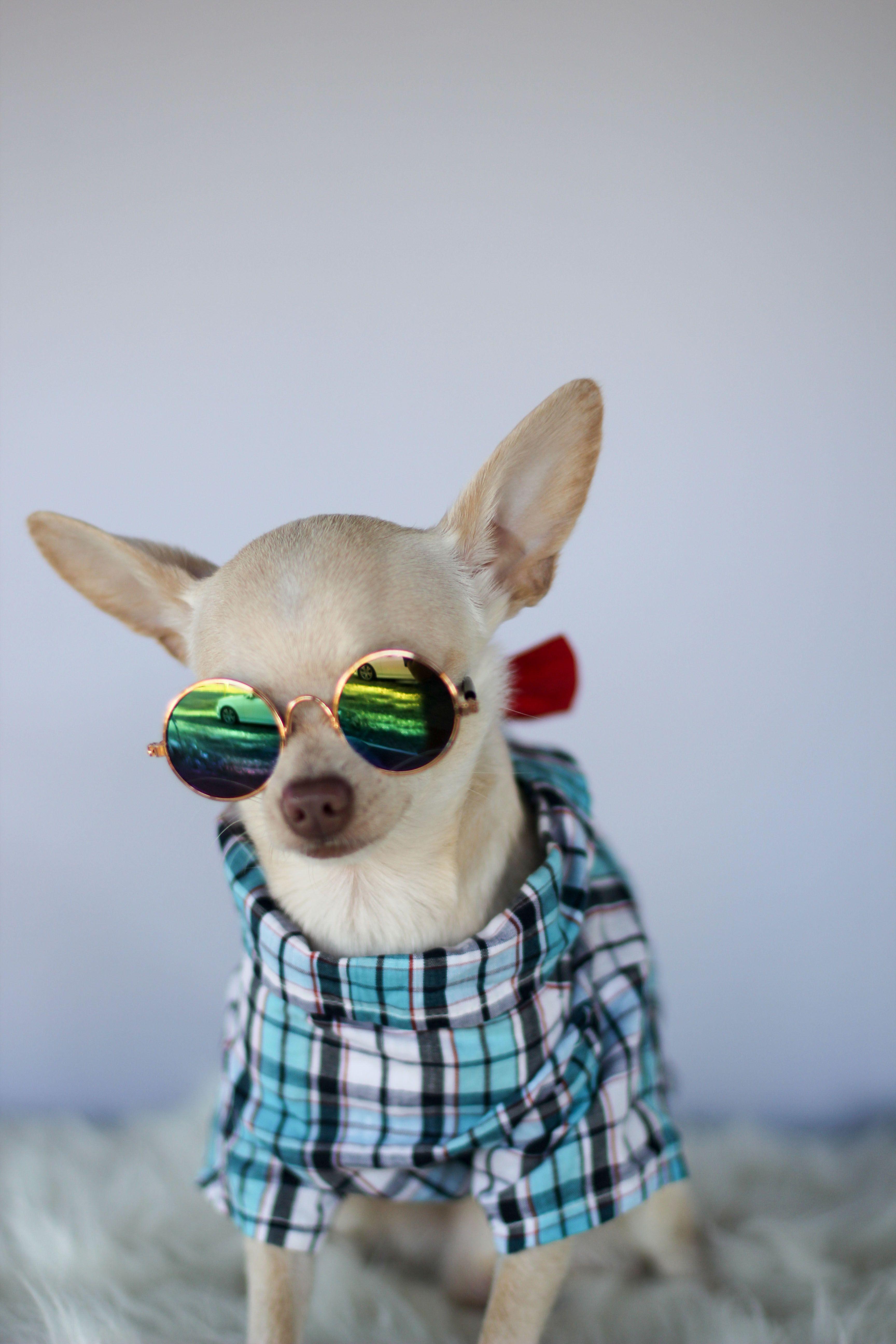 Pin by Tania Garcia on Loki Cat eye sunglasses, Loki