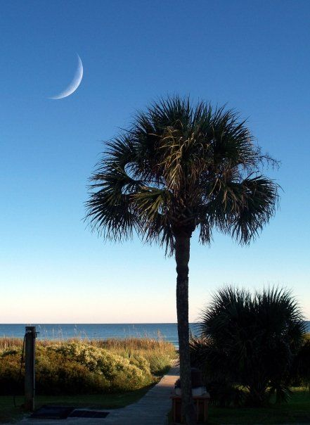 South Carolina Myrtle Beach Palmetto Tree Crescentmoon This Is Where I Want To Be