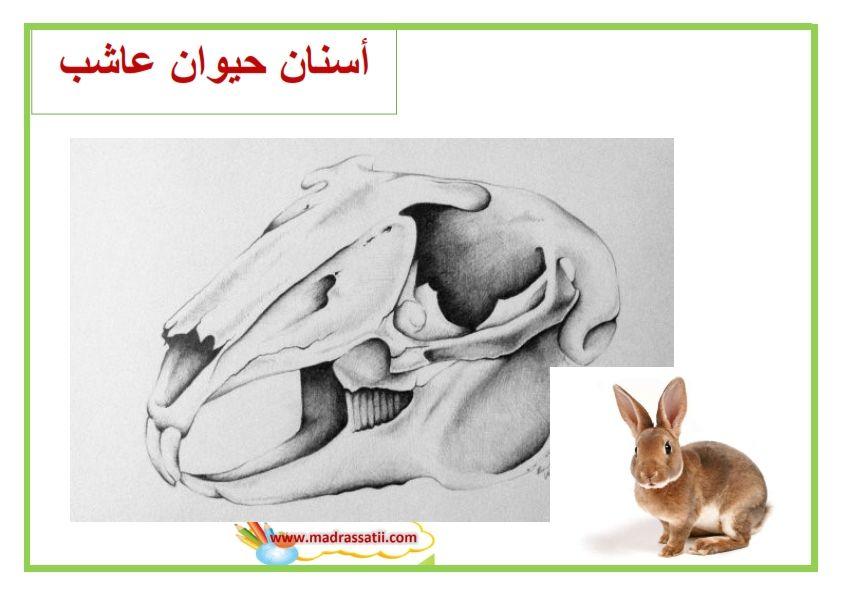 معلقات صور أسنان الحيوانات Madrassatii Com Life Cycles Humanoid Sketch Art