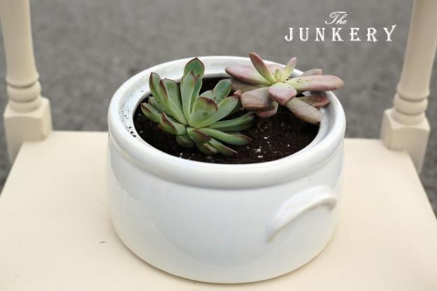 Succulents in Ironstone - The Junkery