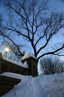 Pohon Cabang Salju Musim Dingin Menanam Bunga Salju Menanam Musim Dingin
