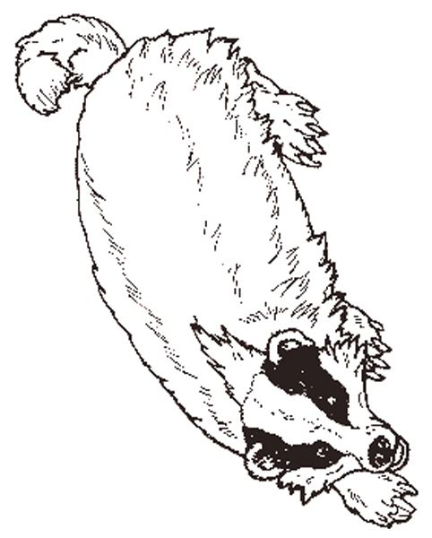 Badger Coloring Pages Wisconsin 2020 With Images Wisconsin