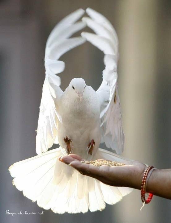 Não dá pra confiar  em quem prega a paz com pedras nas mãos. Rosi Coelho