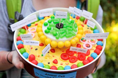 Eukaryotic cell cake | School Ideas | Pinterest | Cell project ideas
