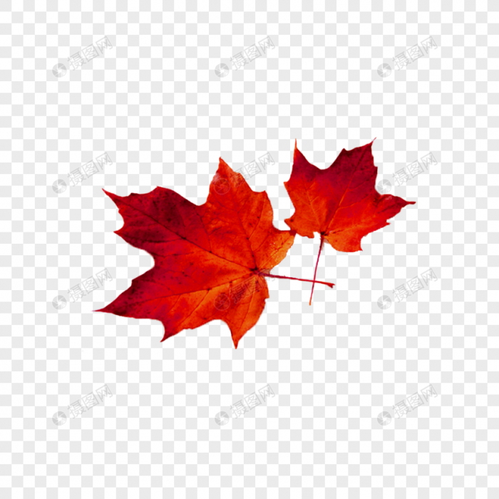 Black Maple Leaf Png Image Vector Images Png