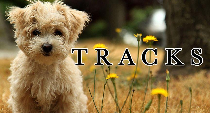 Tracks Dog Adoption Near Me Animal Wallpaper Small Dog Adoption