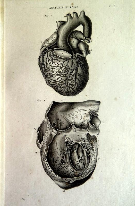 Heart engraving. 1852 antique human anatomy print, rare vintage ...