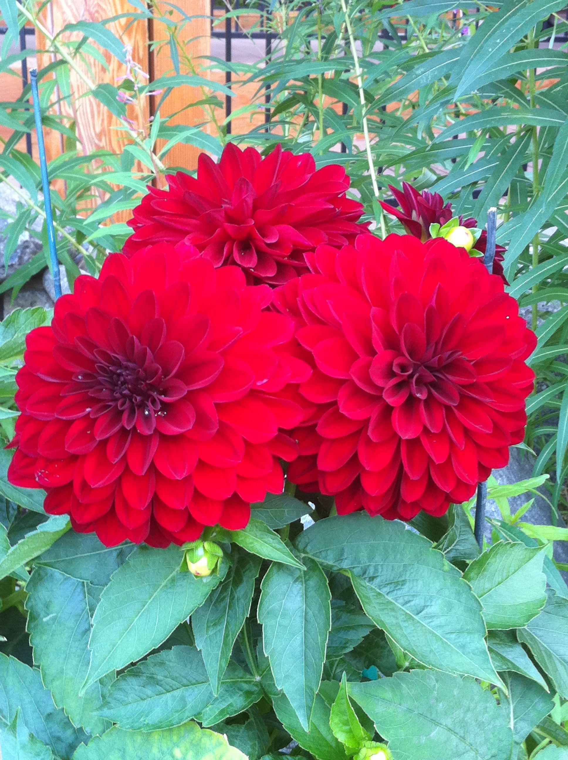 Alaska flowers flowers plants garden