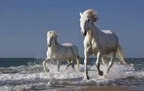"""Résultat de recherche d'images pour """"cavalos em movimento"""""""