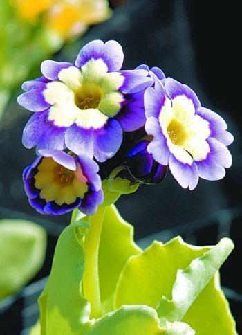 Prple flower. 90