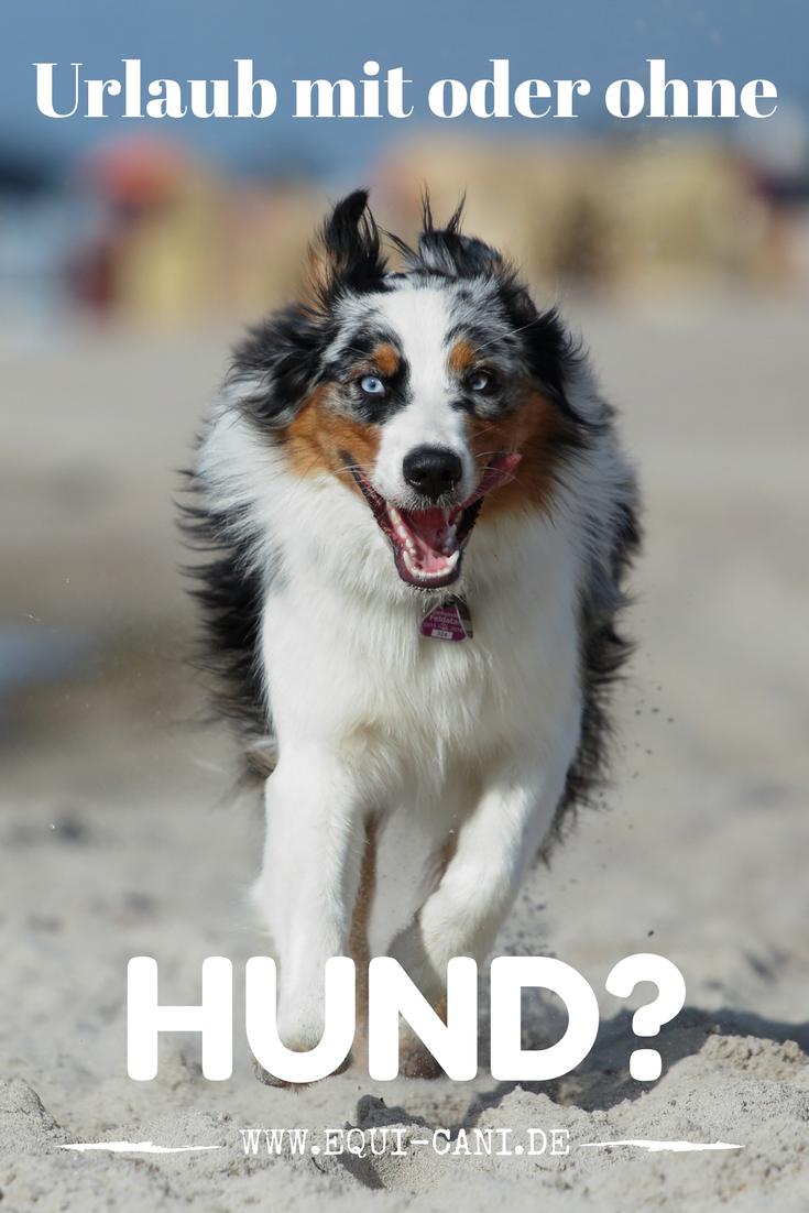 Tipps Fur Den Urlaub Mit Hund Equicani Hundeblog Urlaub Mit Hund Hunde Australian Shepherds
