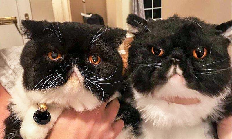 The Original Plush Cuddle Clone Cuddling, Your pet, Cute