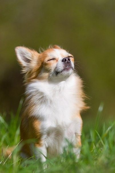 Spring Is In The Air Tiny Dog Breeds Baby Dogs Animals