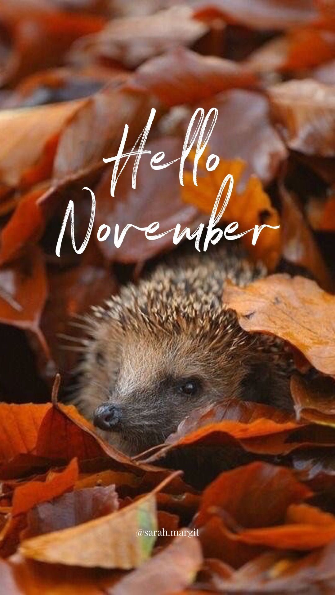 Hello November Wallpaper #hellonovemberwallpaper #hellonovemberwallpaper Hello November Wallpaper #hellonovemberwallpaper #hellonovembermonth