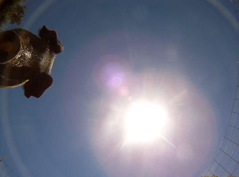 Unbelievable Video Of A Camera Hurtling Towards Earth And Landing In A Pig Pen